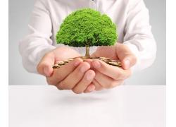 双手托金币绿树商务男人