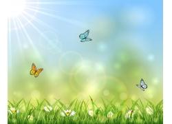 蝴蝶菊花春天背景