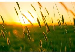 美丽草丛清晨风景