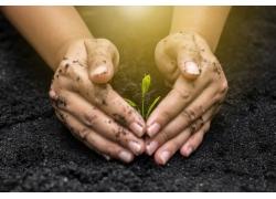 双手与植物幼苗