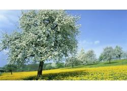 春天果园风景