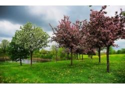 樱花草地风景