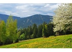 春天树林草地风景