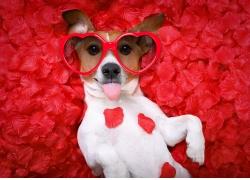 鲜花背景与狗狗