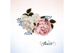 美丽花朵图案素材