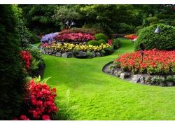 彩色花园花朵风景图片