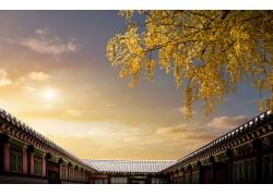 秋天树中式建筑风光