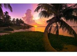 景观,海滩,日落,棕榈树,海,天空,云,佛罗里达250784