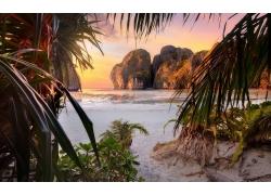 景观,海滩,日落,棕榈树,灌木,岩,悬崖,海,砂,树叶,菲律宾,热带,岛