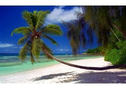 景观,海滩,棕榈树,海,灌木,砂,岛,热带,塞舌尔,阴影,夏季,假期250