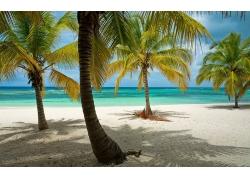 景观,海滩,热带,棕榈树,多明尼加共和国,海,加勒比,砂,岛,夏季252