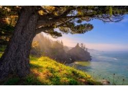 景观,俄勒冈,海,阳光,滨,森林,草,树木215872
