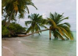 景观,马尔代夫,棕榈树,海滩,海,砂,热带,云,岛274503