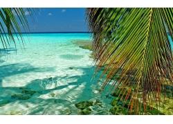 景观,马尔代夫,热带,海,棕榈树,环礁,树叶,海滩,绿色,绿松石,夏季