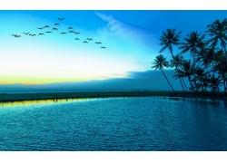 景观,鸟类,飞行,蓝色,湖,棕榈树,海,海滩347607