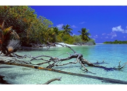 景观,荒岛,海滩,树木,死树,棕榈树,海,砂,水,热带,夏季,马尔代夫2