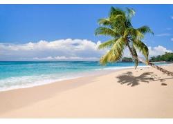 景观,热带,岛,海滩,棕榈树,海,砂,云,夏季,马达加斯加331269