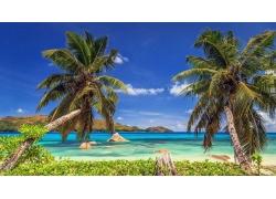 景观,热带,海滩,岛,棕榈树,海,夏季,塞舌尔345938