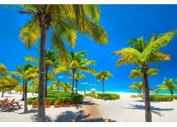 景观,热带,海滩,棕榈树,海,加勒比,走道,白色,砂,椅子,蓝色,天空,