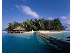 景观,热带,采取,走道,海滩,棕榈树,海221356