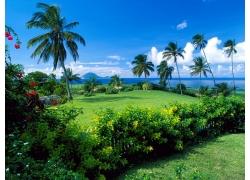景观,棕榈树,天空136466