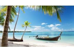 景观,棕榈树,海,海滩59571