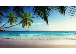 景观,棕榈树,海,热带,海滩59534