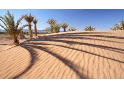 景观,棕榈树,砂,沙漠,沙丘,阴影,树木,丘陵192510