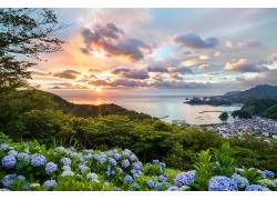 日本,日落,市容,海,花卉,丘陵,樹木,繡球,灣,港口,夏季,云,綠色,