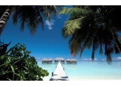 景观,海滩,走道,棕榈树,海,水,舱,热带,夏季,蓝色,天空,马尔代夫2
