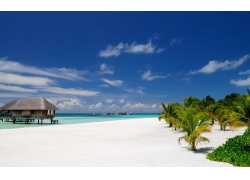 景观,海滩,马尔代夫,棕榈树,砂,热带,采取,海,夏季,平房,建筑,岛2
