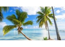 景观,法属波利尼西亚,夏季,海滩,码头,棕榈树,海,热带,波拉波拉岛