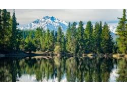 景觀,森林,山,雪峰,水,反射,松樹,籬笆,智利322332