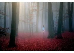 景觀,森林,薄霧,太陽光線,紅,樹葉,秋季,樹木,陽光,戶外的女人,步