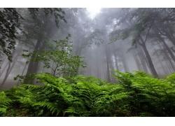 景觀,森林,薄霧,蕨類植物,保加利亞,樹木,大氣層255234