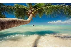 景观,加勒比,海,棕榈树,海滩,热带,夏季,帆船,水242289