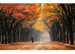 景觀,華美,樹葉,街,韓國,公園,樹木,薄霧,人,秋季,隧道263870