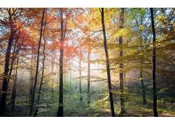 景观,华美,树木,秋季,森林,阳光,薄雾227263