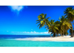 景观,热带,棕榈树,海59580