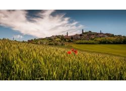 花卉,皮埃蒙特,意大利,鎮,領域,景觀57717