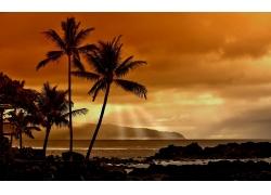 海滩,日落,景观,棕榈树,海,天空,阳光60442