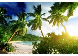 海滩,景观,棕榈树,热带118097