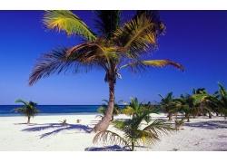 海滩,砂,景观,棕榈树161070