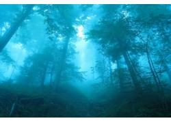 薄雾,森林,瑞士,景观,蓝色,树木,路径,灌木,阳光265687