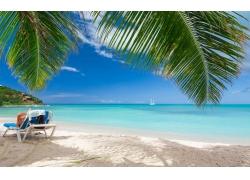 海滩,夏季,热带,海,景观,加勒比,棕榈树,砂,云,假期242624
