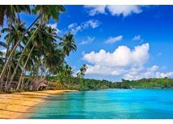 海滩,景观,棕榈树,海,水,天空207387