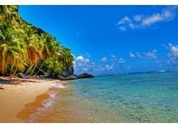 海滩,景观,棕榈树,热带291427