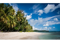 海滩,棕榈树,海,云,砂,热带,夏季,假期,景观202457