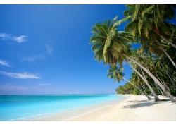海滩,棕榈树,海,景观,性质207436