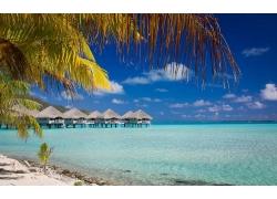 海滩,波拉波拉岛,夏季,景观,海,热带,平房,采取,棕榈树,法属波利